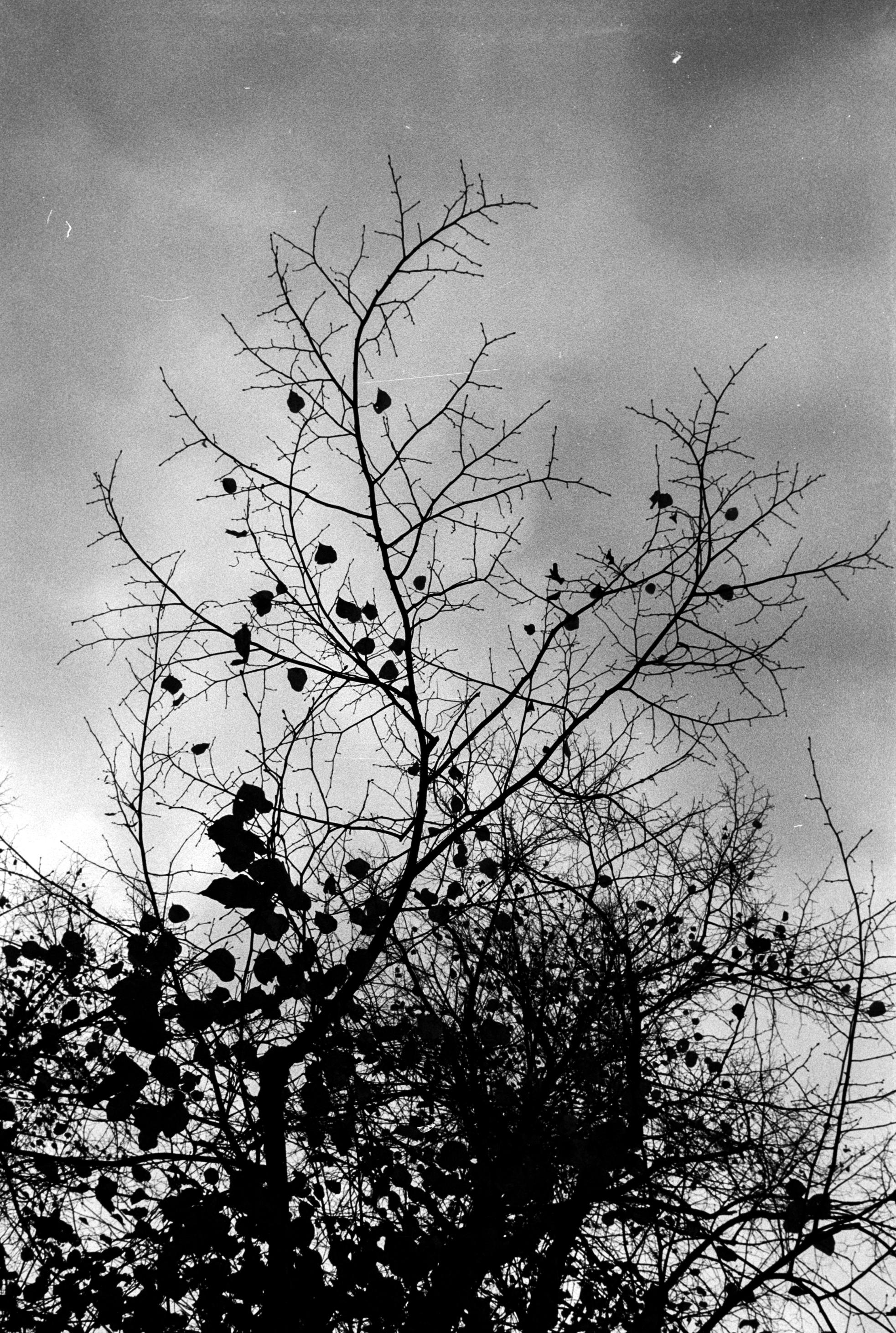 Nature 15.jpg