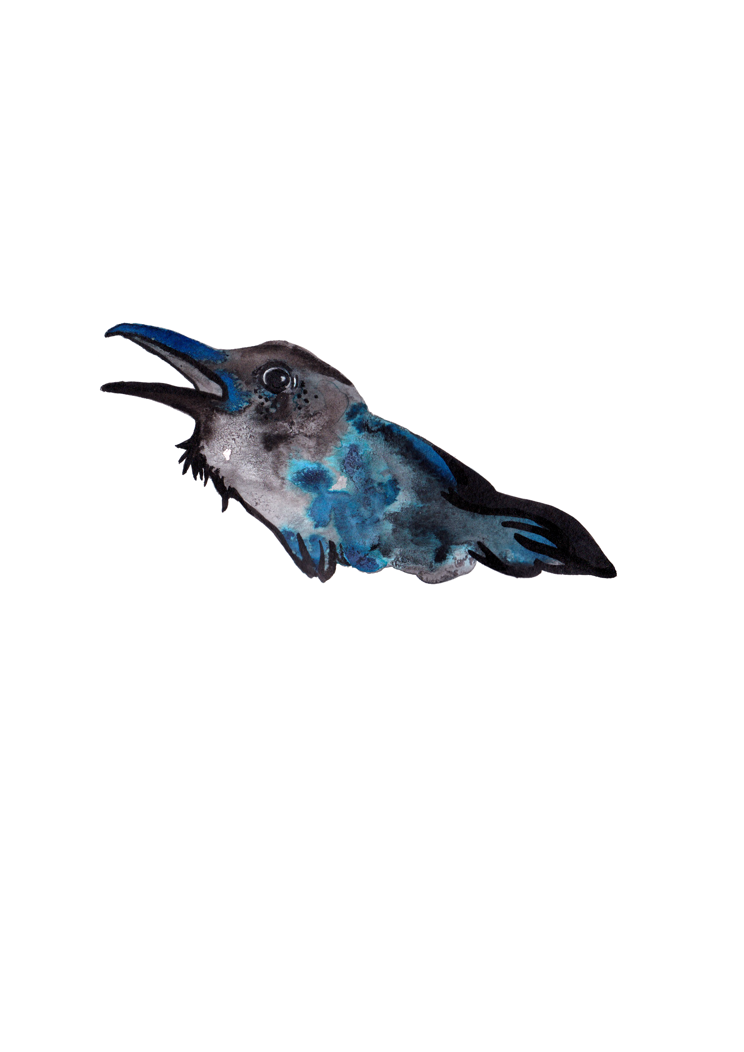 raven3.png