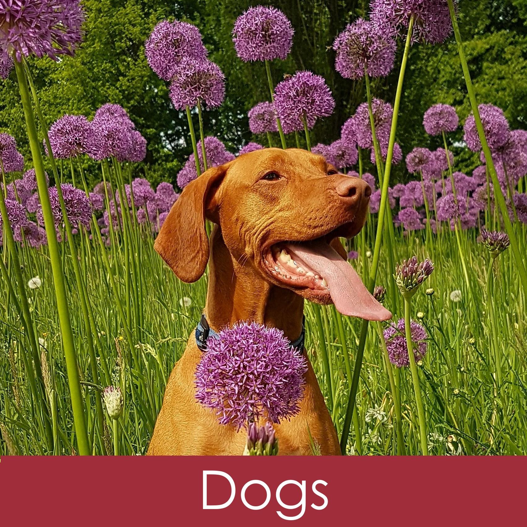 DogPng.jpg