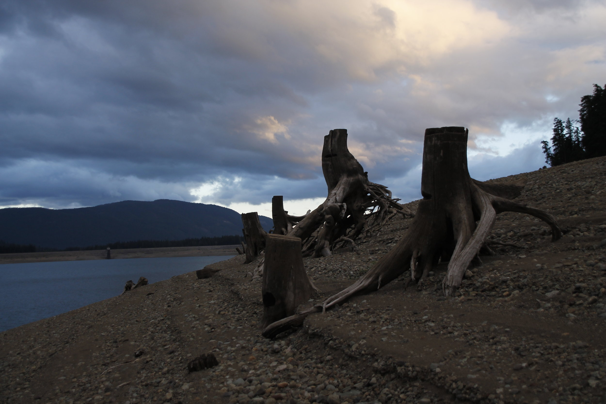 The old stumps on the lake shore are twisted into interesting shapes.
