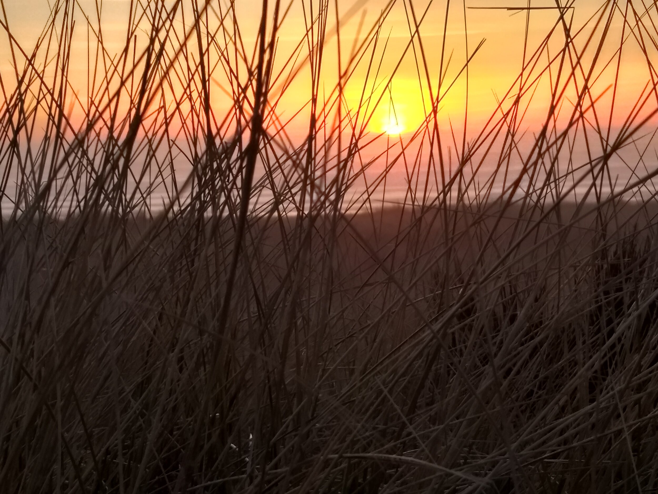 There is a trail across the crest of the sand dunes between the campground and beach that offers amazing views of the sunset.