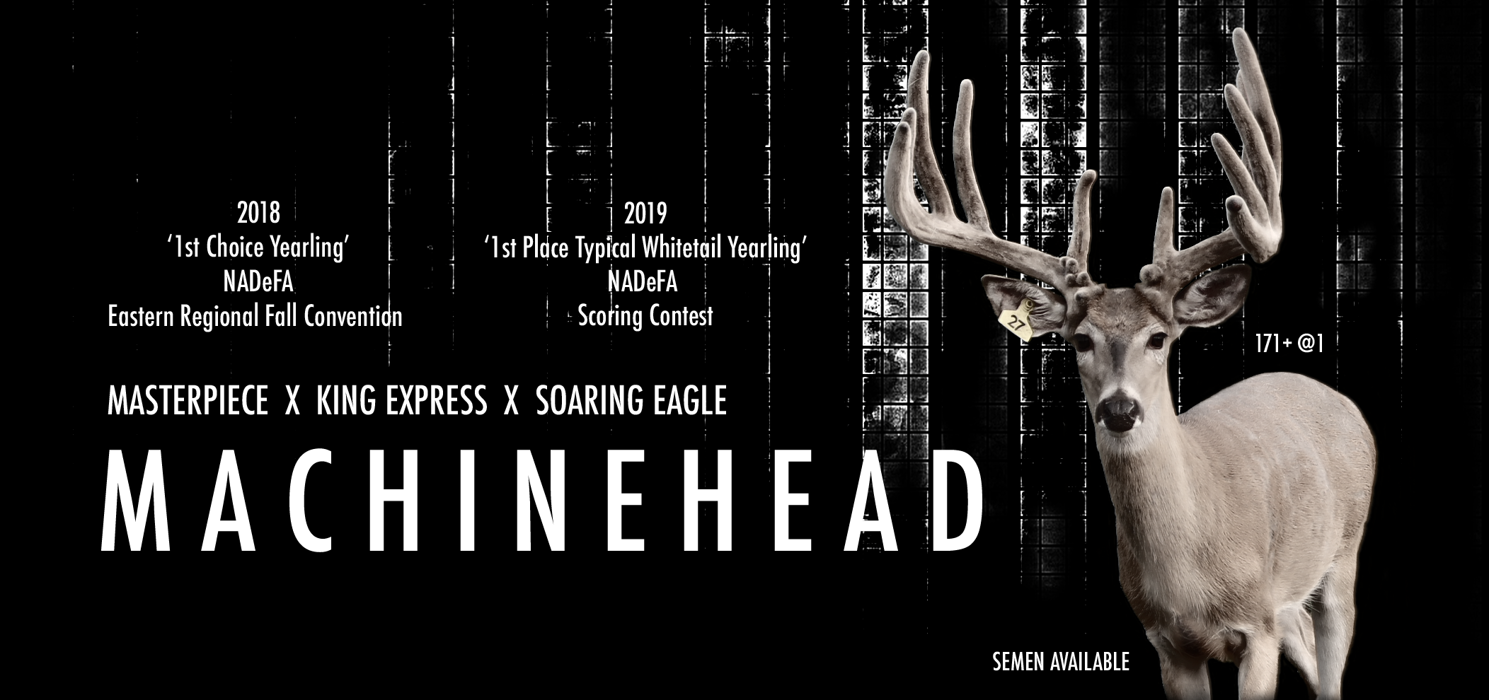 Machinehead Ad for web 04232019.png