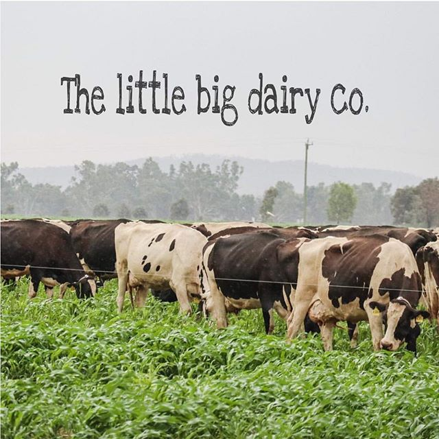 Single source farming:  the little big dairy co delivers high quality milk from one dairy, traceable Down to the very cow that made it 💙 from our home town in central western Nsw, Dubbo