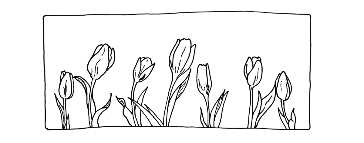 Tulips Header.png