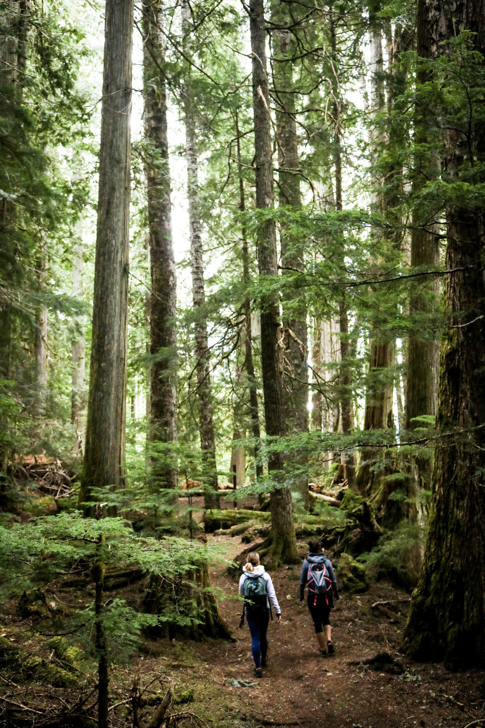 Hiking Whistler old growth forest Cheakamus Lake