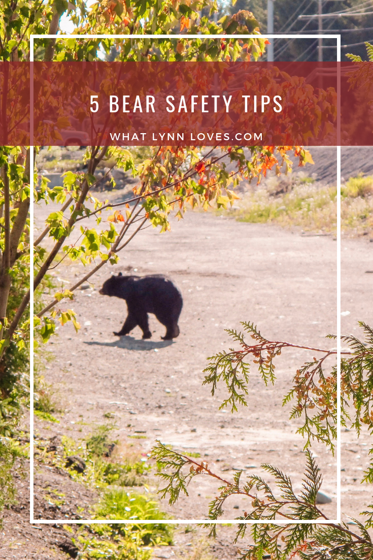 Whistler Bear Aware Safety Tips