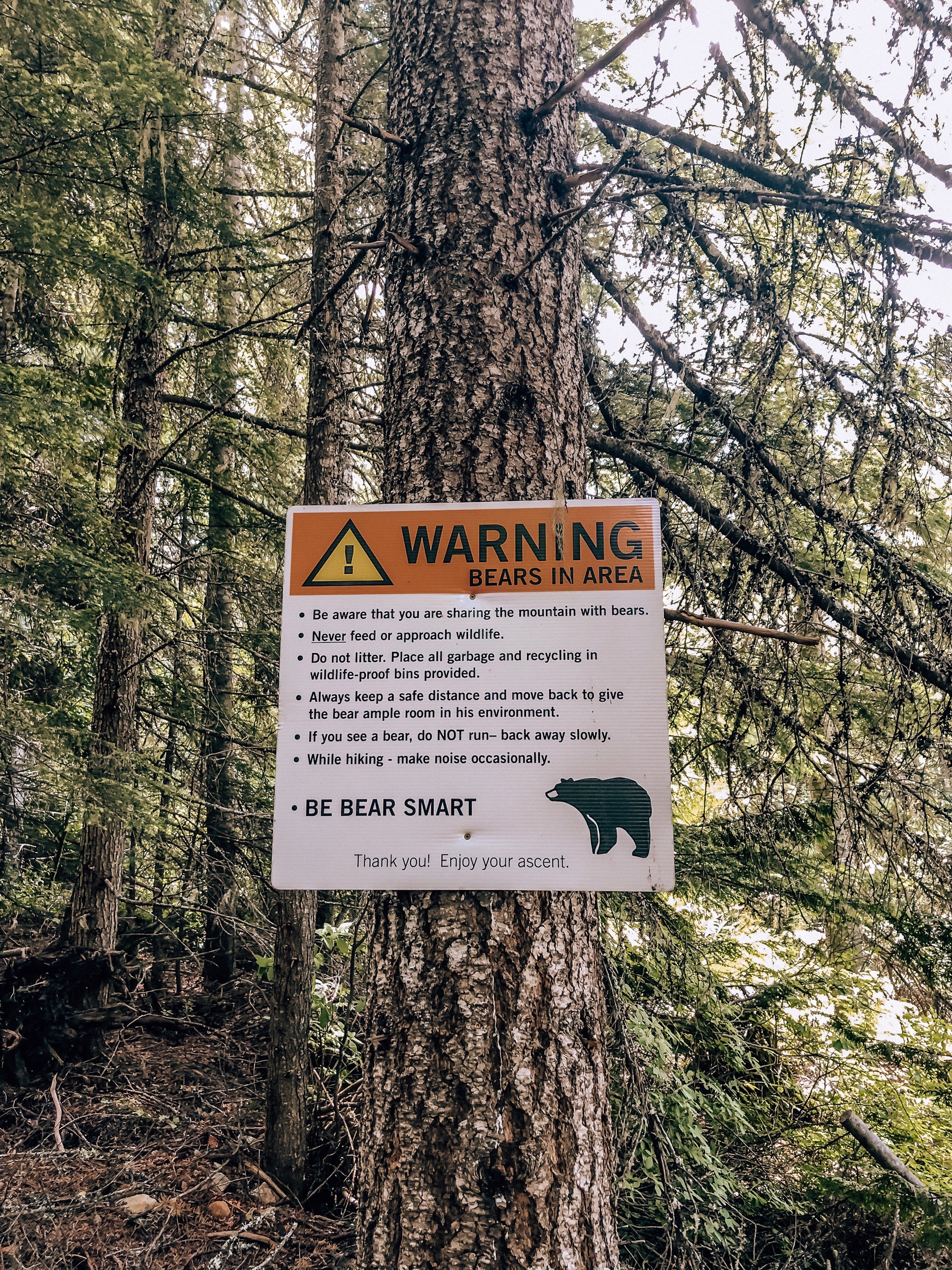 Bear safety on Whistler Blackcomb