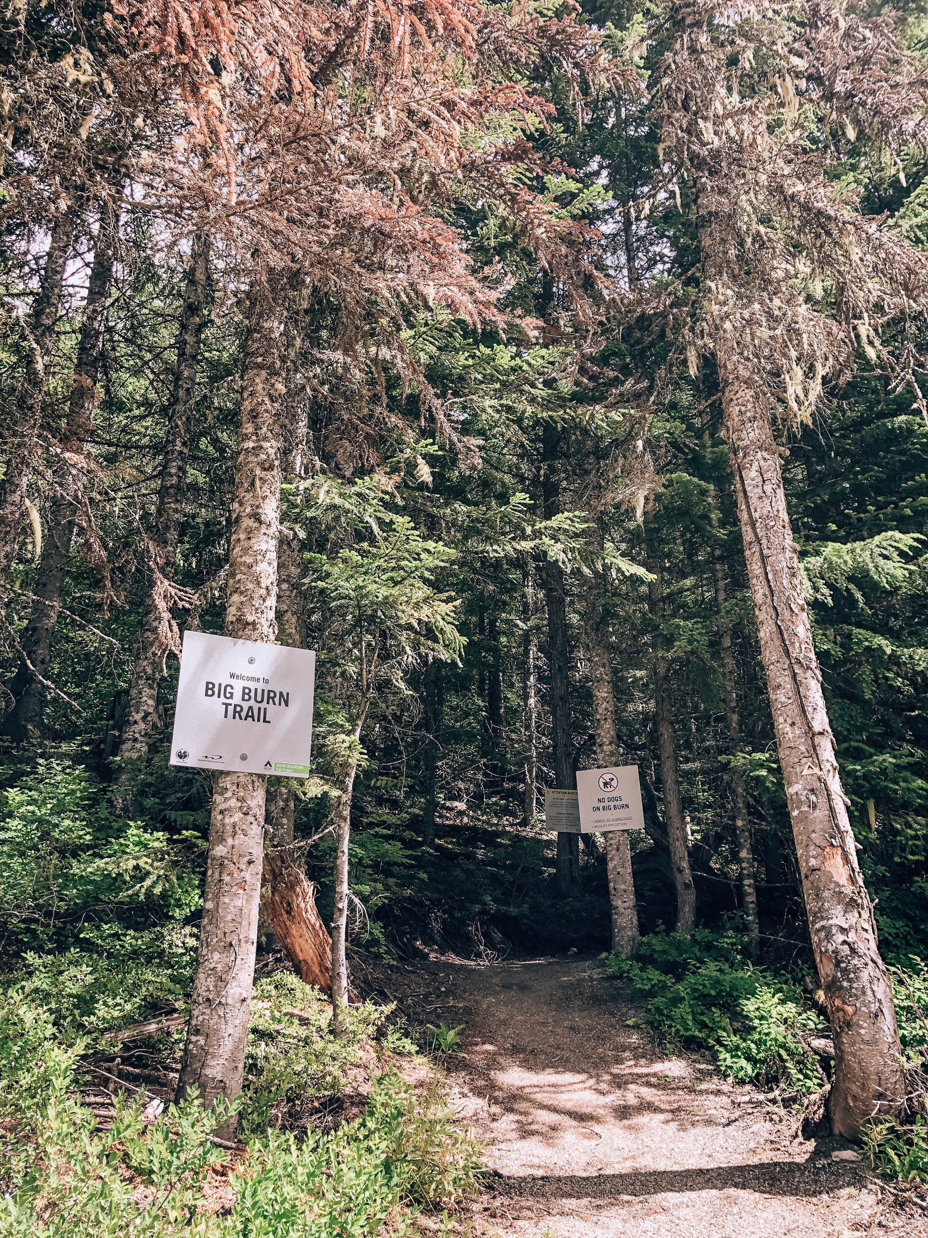 Big Burn Ascent Trail hike on Whistler Blackcomb Canada