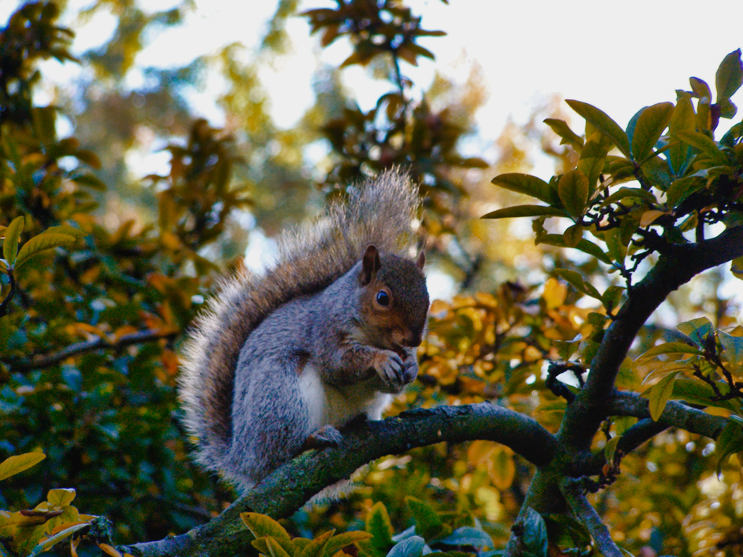 Tree Rat-Kensington Gardens-London-England-wmlamont_1aPB040175.jpg