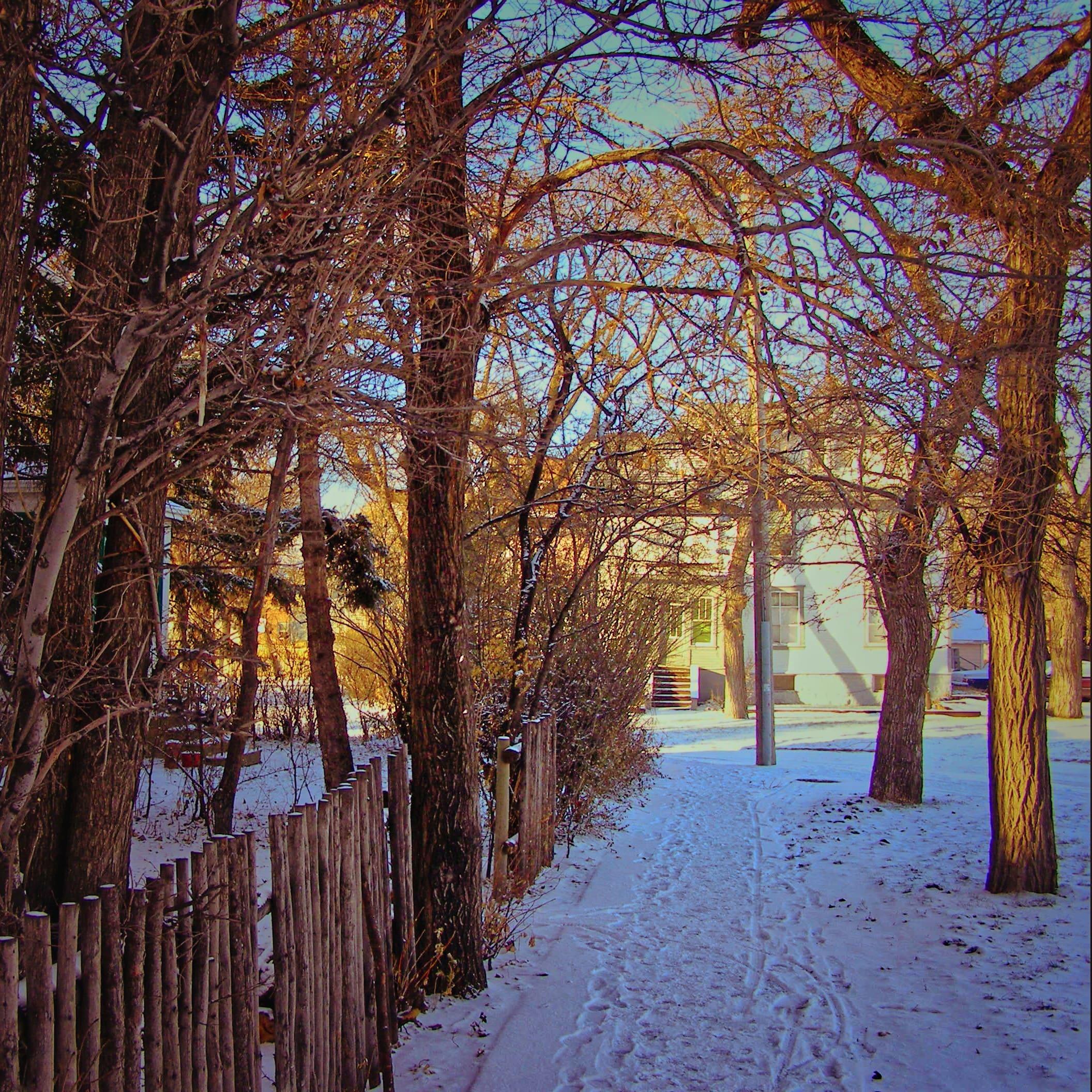 Morning Walks to Tim Hortons, Winnipeg [2006]