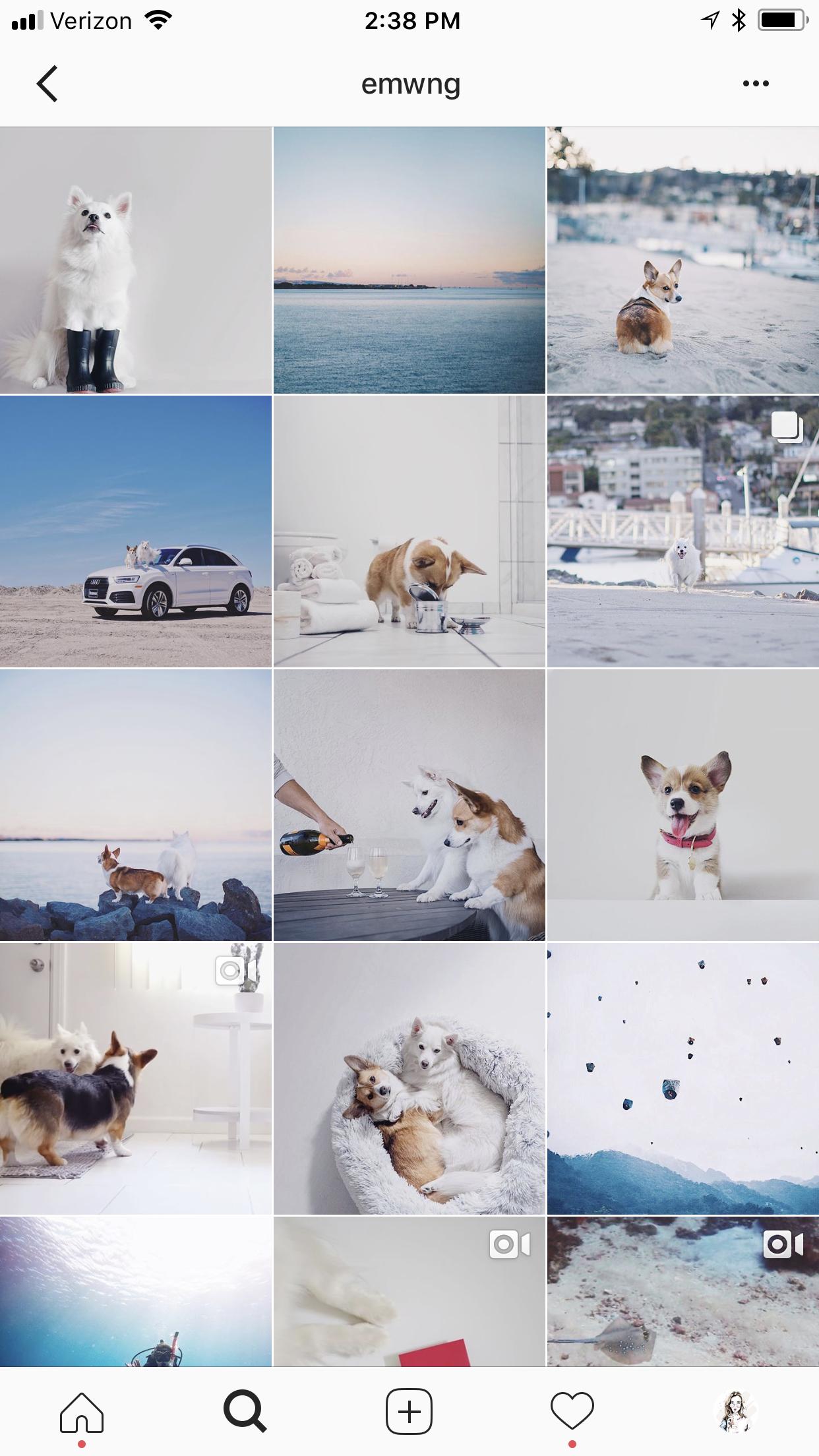 @emwng (minimalist AND puppies!!!)