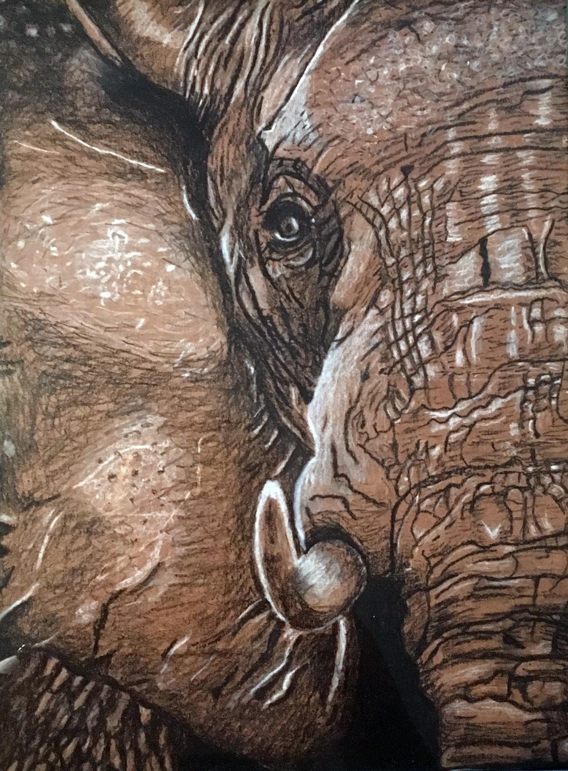 """""""Elephant"""" - Kallie Stevens"""