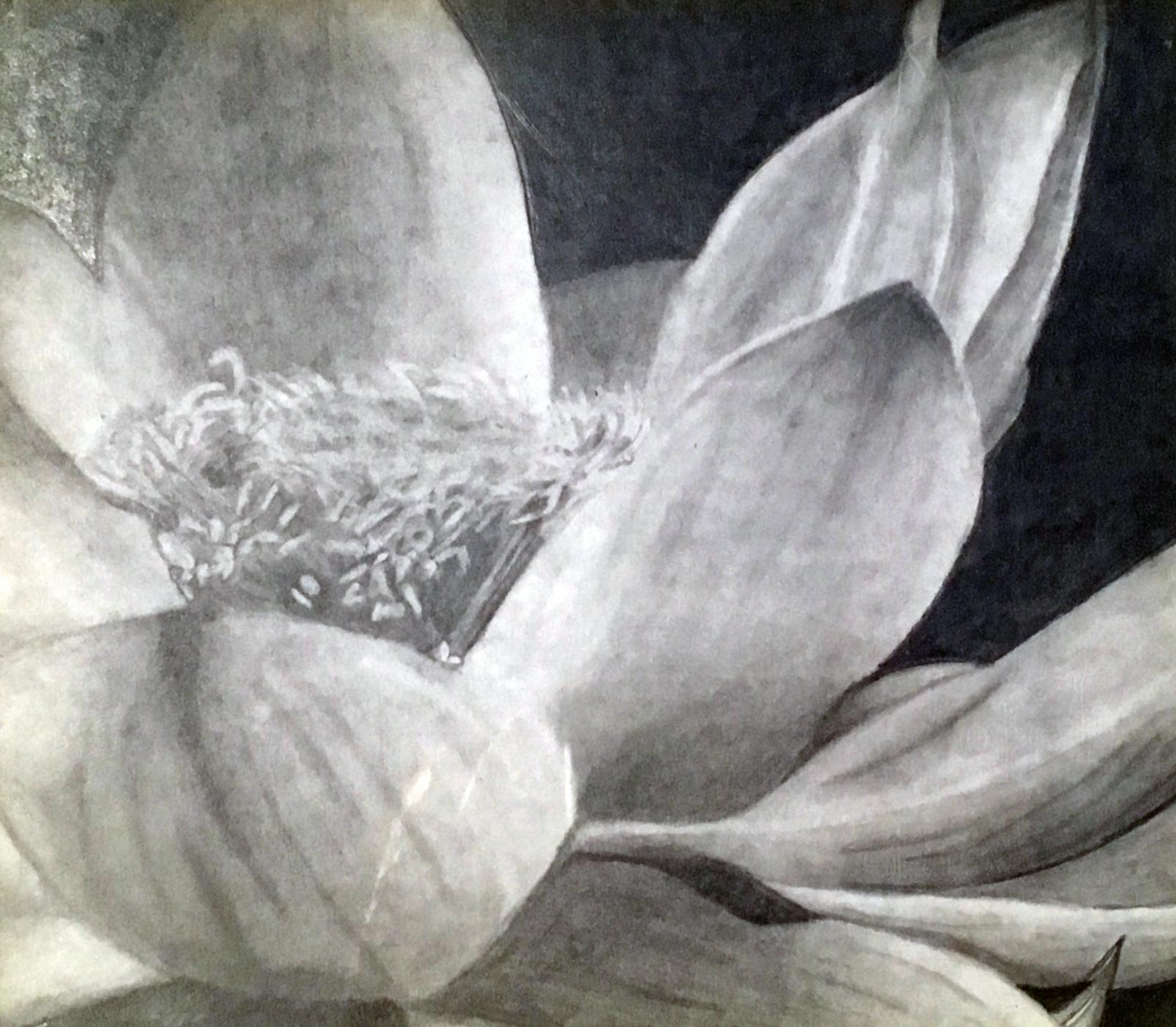"""""""Lotus"""" - Kallie Stevens"""