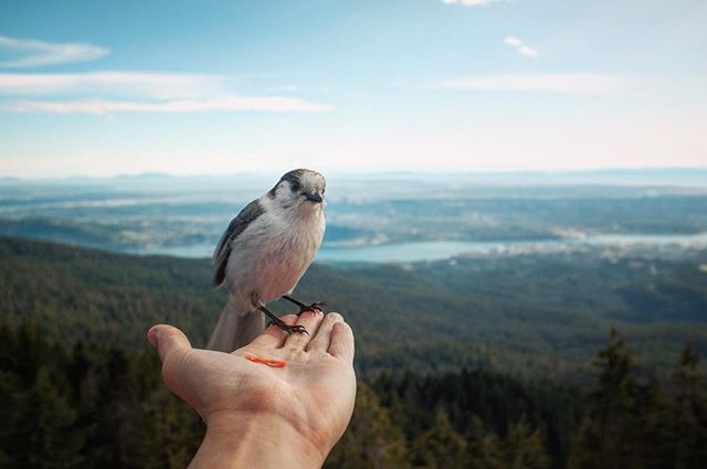 Snack time on the mountain... #beautifulbc