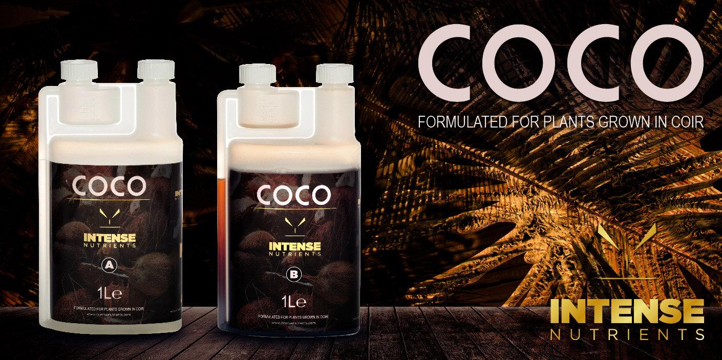 Coco-header-web.jpg
