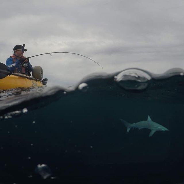 Vår vän @ian.dizzyfish var ute på ett magiskt kajakfiskepass i Florida! Det blev ett helt gäng hajar. Skulle ni våga fiska haj från er kajak? 🦈😬