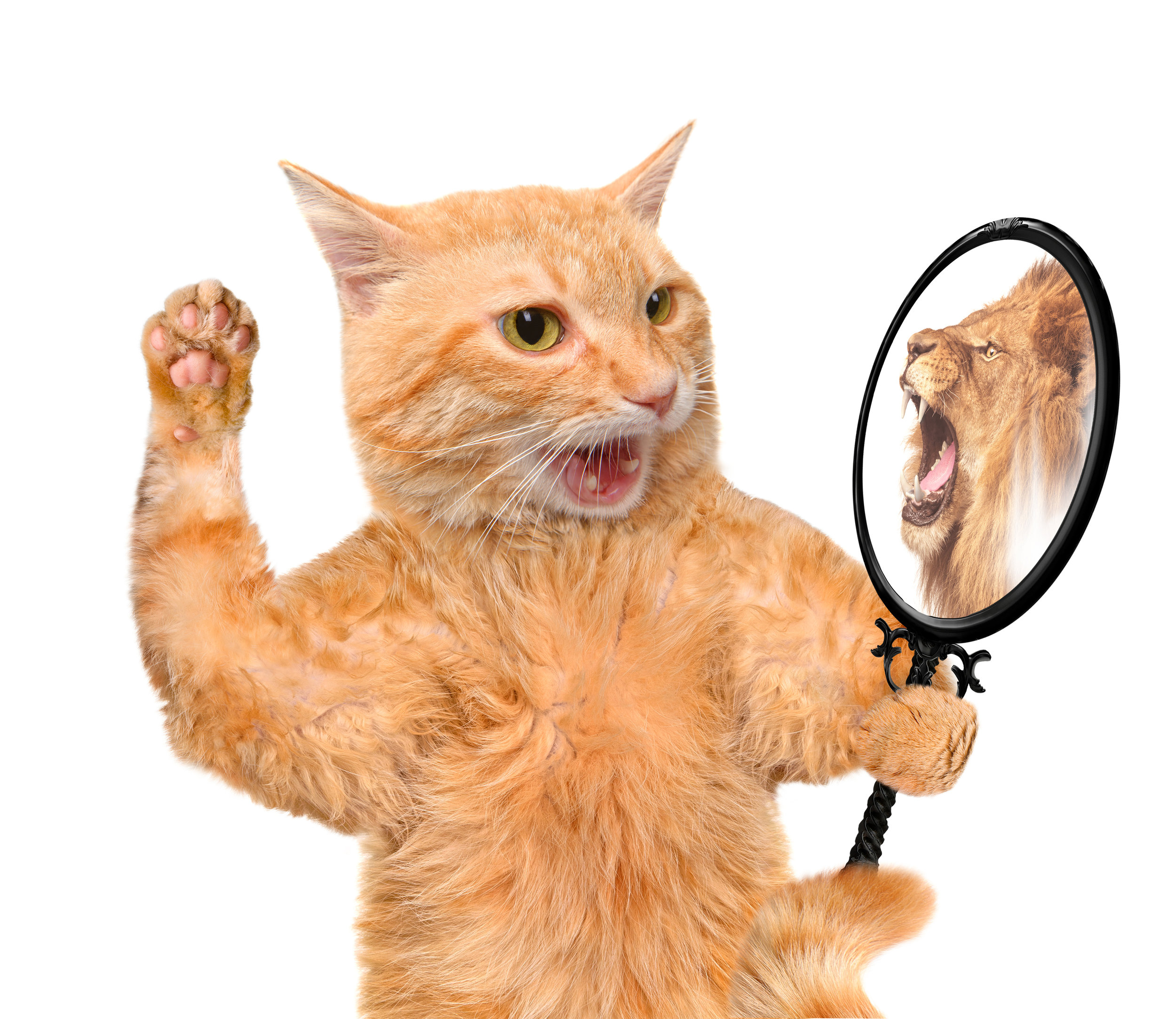 Cat mirror lion.jpg
