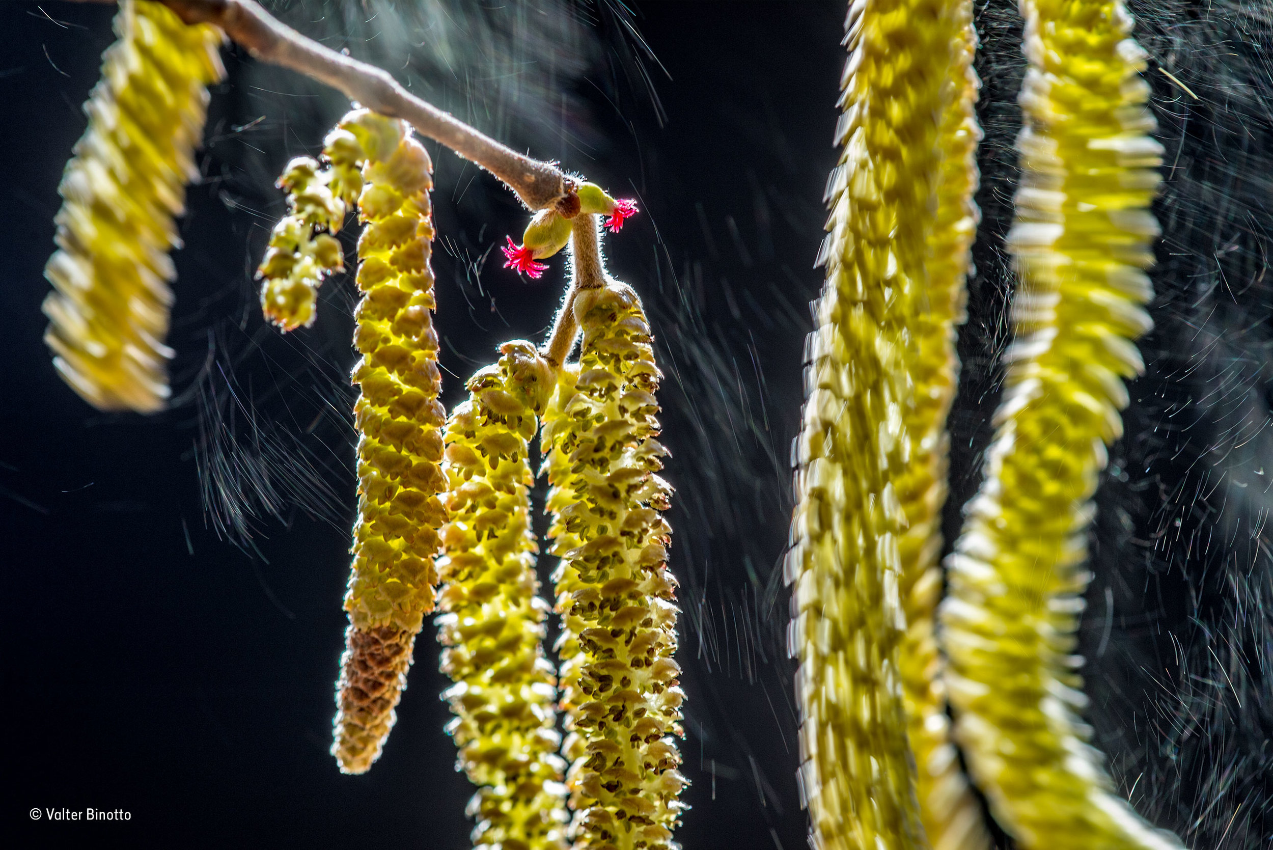 © Valter Binotto_Wildlife Photographer of the Year_ Plants winner
