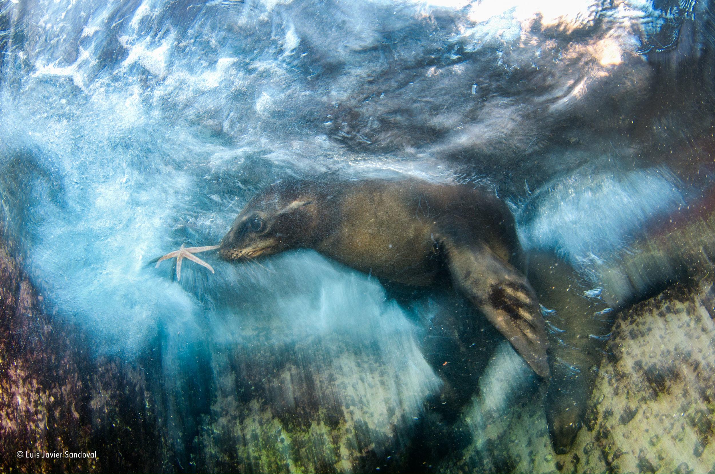 © Luis Javier Sandoval_Wildlife Photographer of the Year_ Impressions winner