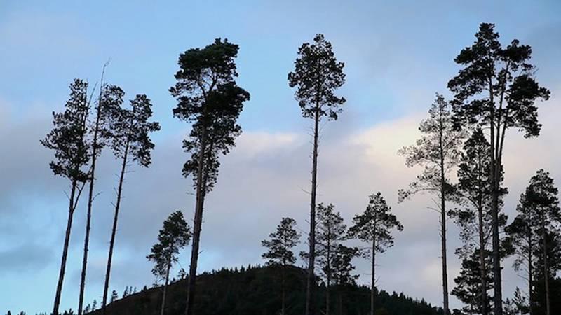 tbf_trees_kay_walsh.jpg