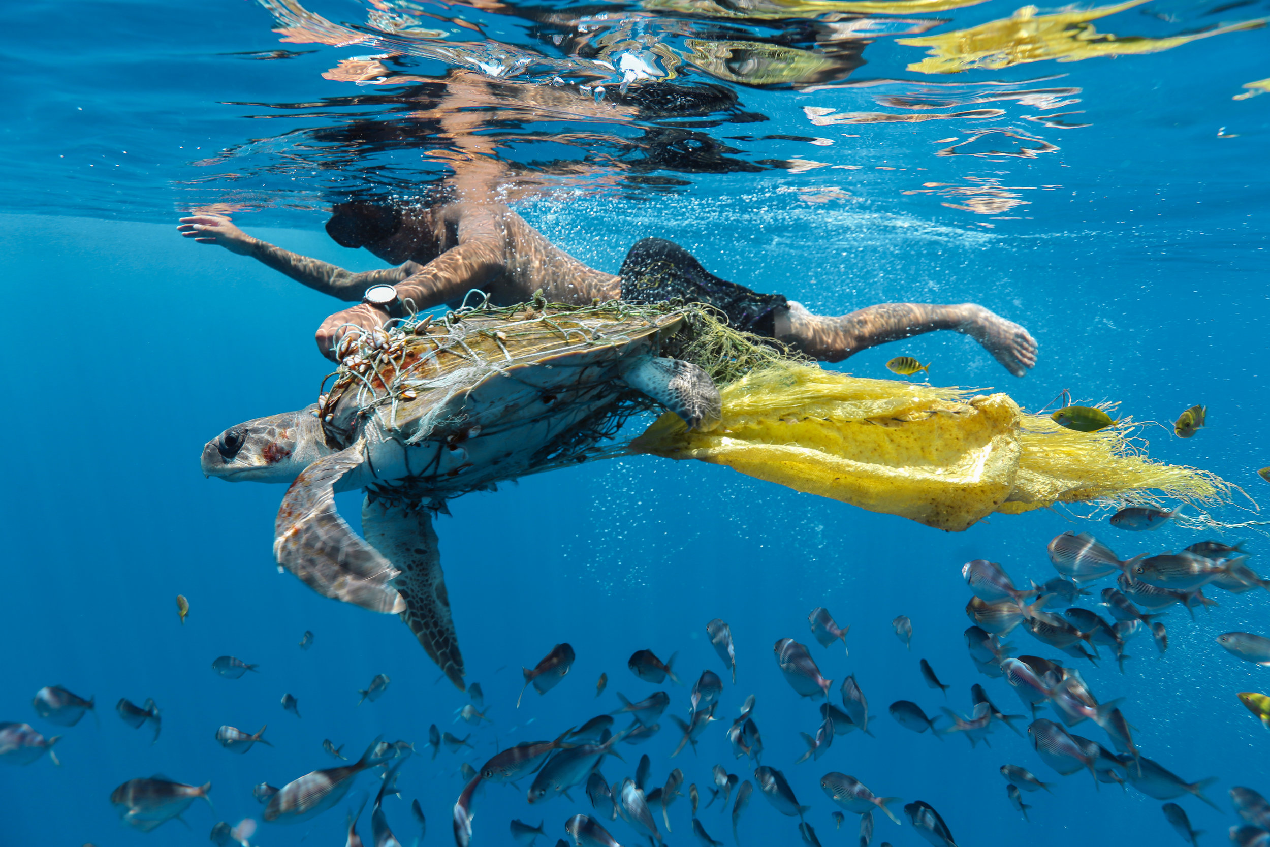Jing Li, Save Turtle, CIWEM Environmental Photographer of the Year 2018