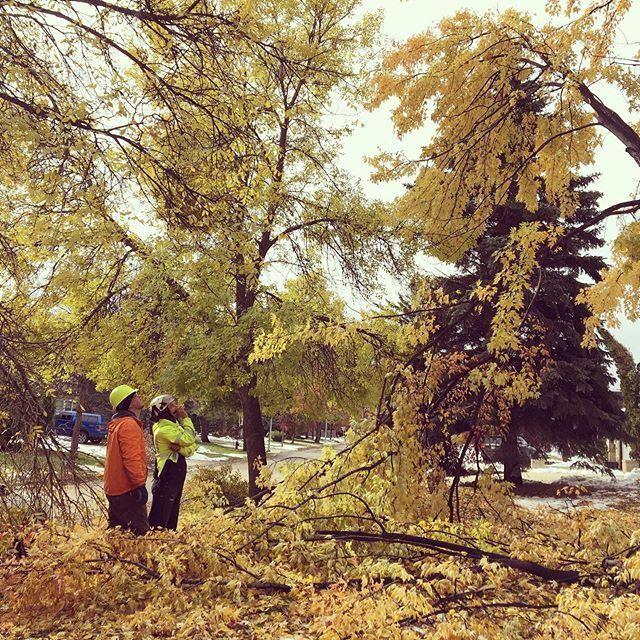 Aaron and Nathan assessing more tree damage. #treemaggedon #arborist #trees #stormdamage #MBstorm #winnipeg #manitoba #work #customerservice #winnipegstorm #treedamage #treelife #treeremoval #treecare #arboristsofinstagram