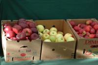 Apples-Cedaredge-CO.jpg
