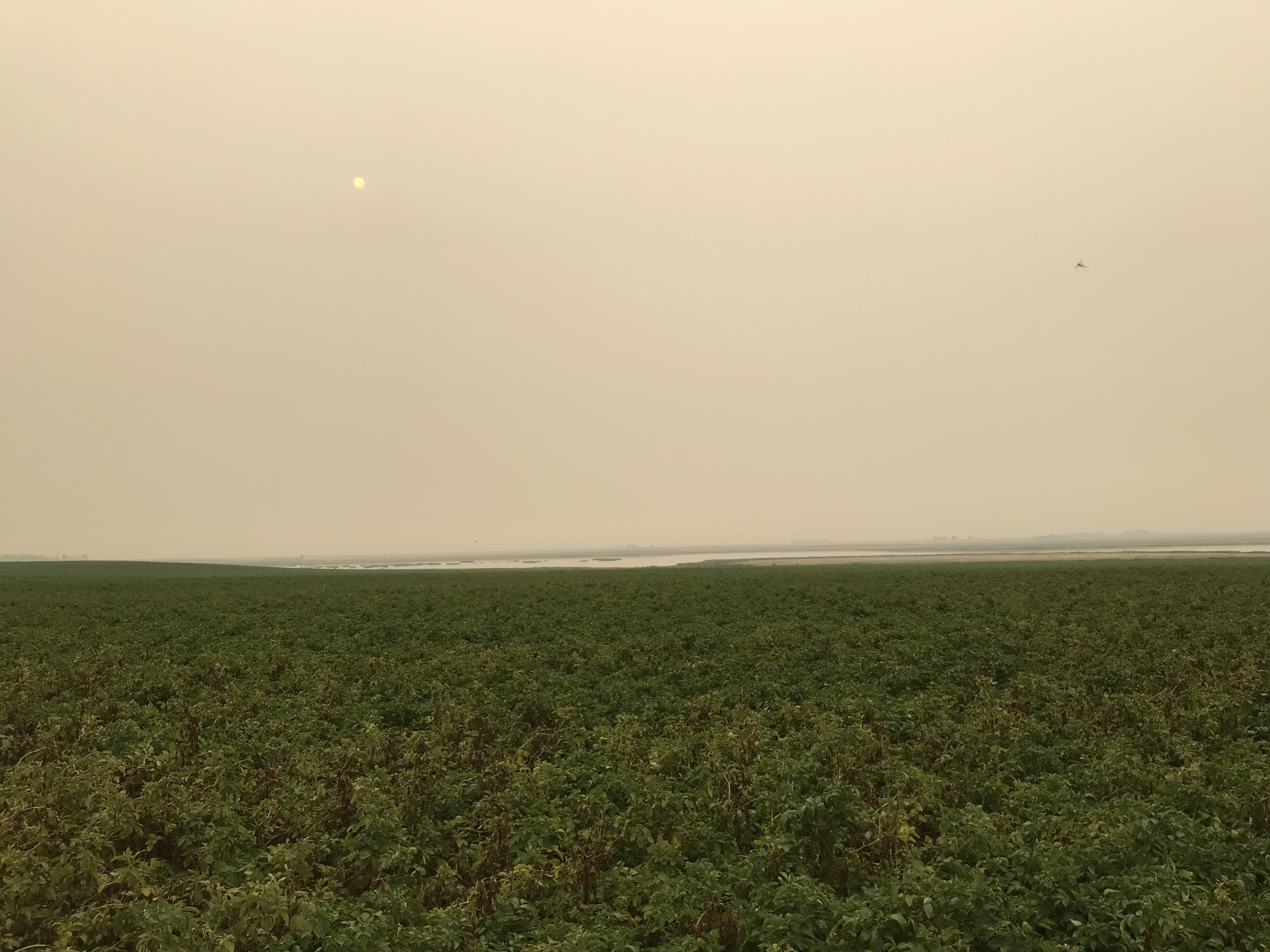 The sun is nearly blocked out from the smoke. Taken August 15, 2018.