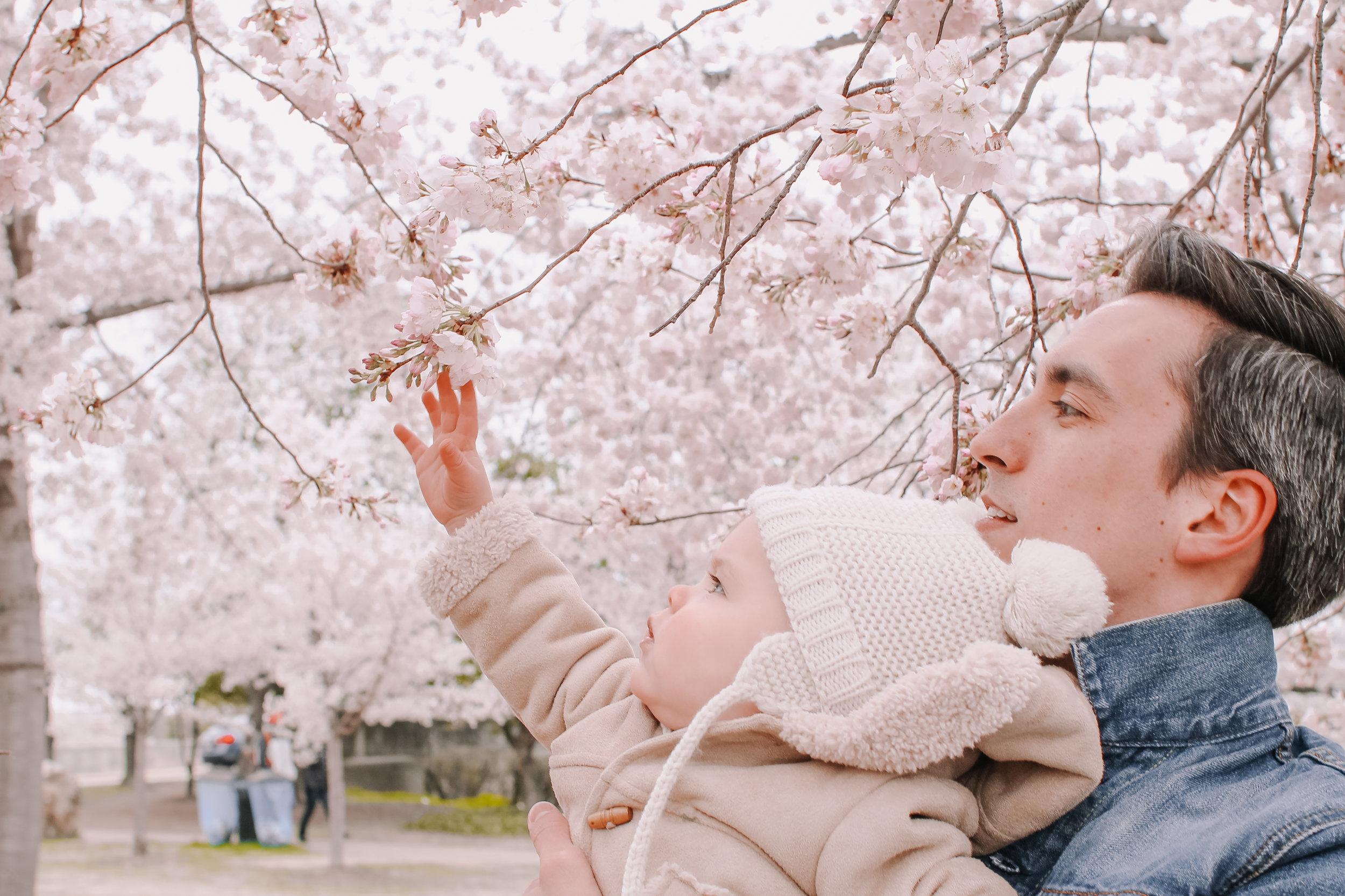 cherryblossoms12.jpg