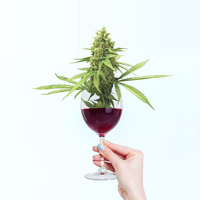 Have you tried hemp infused wine yet? 🍷🌱