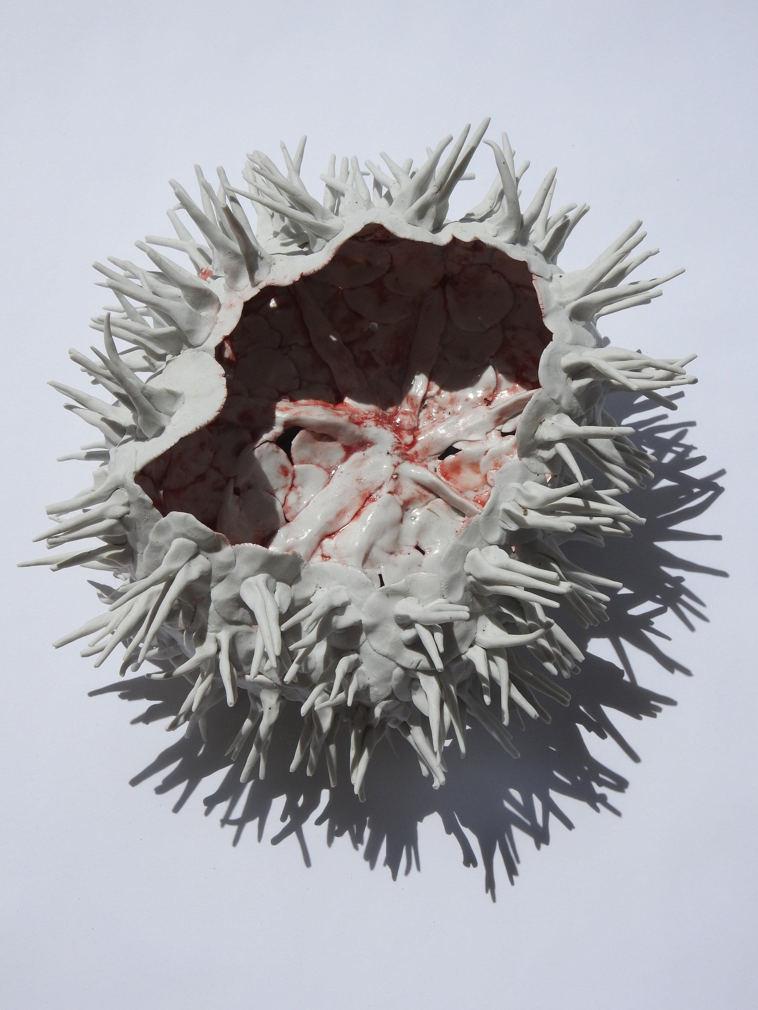 Funky Sea Urchin
