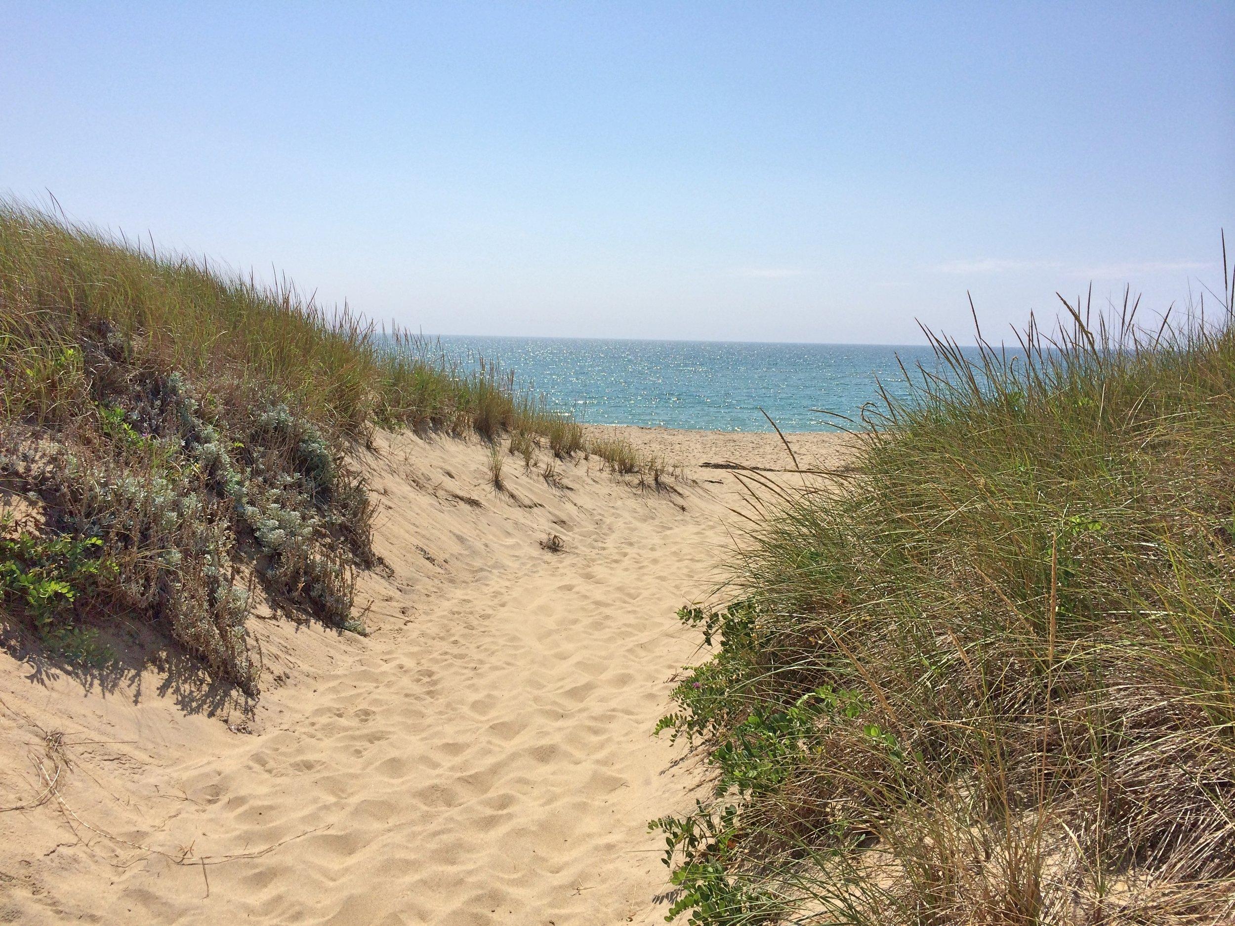 south beach dune.jpg