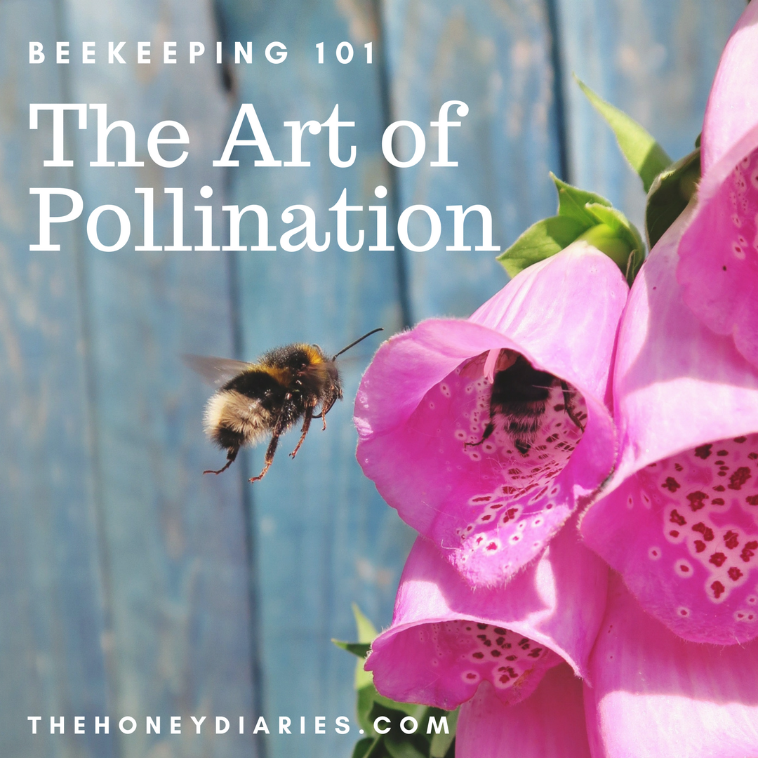 The Honey Diaries - The Art of Pollination