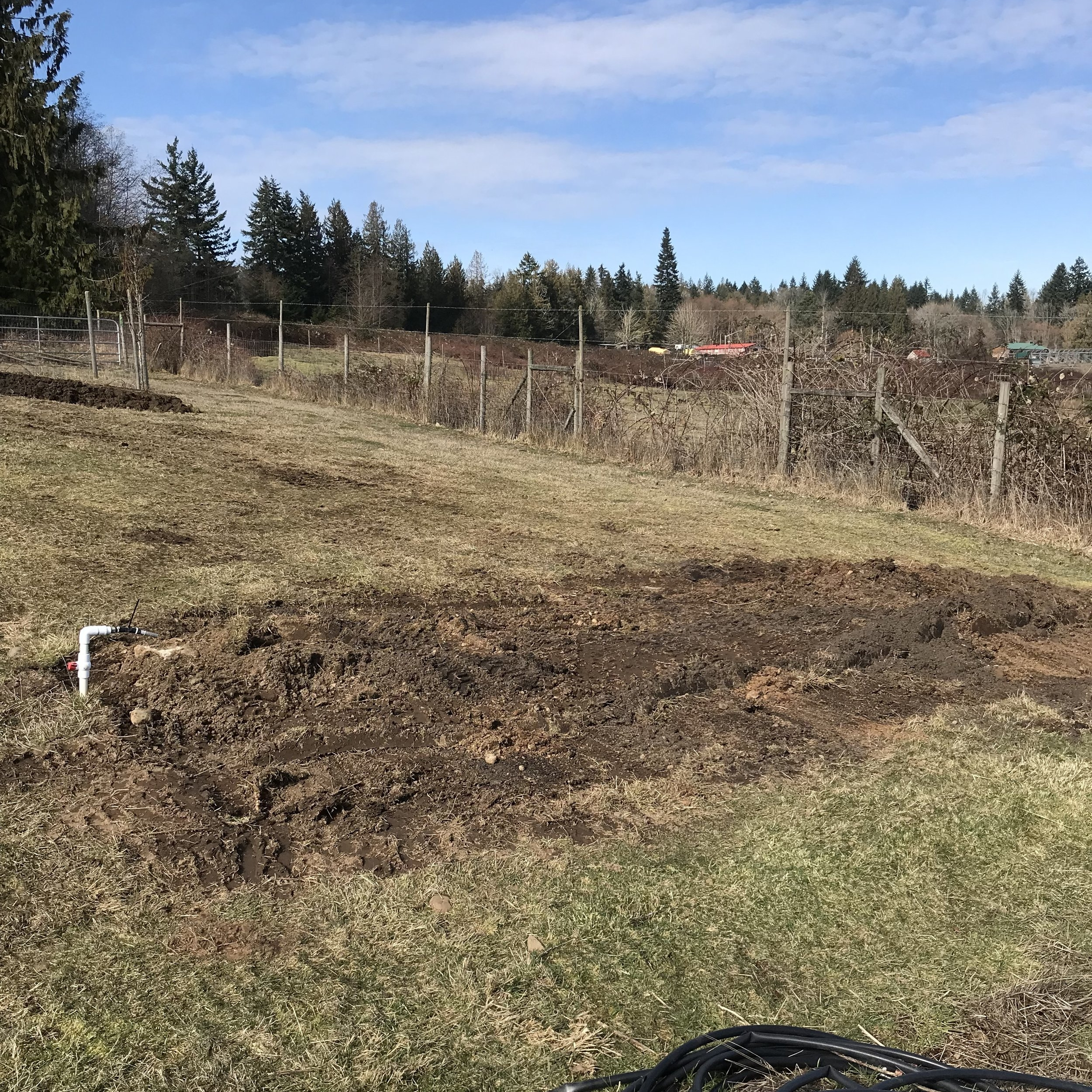 The first stage of our bee yard after my dad dug out the rough area with the tractor.