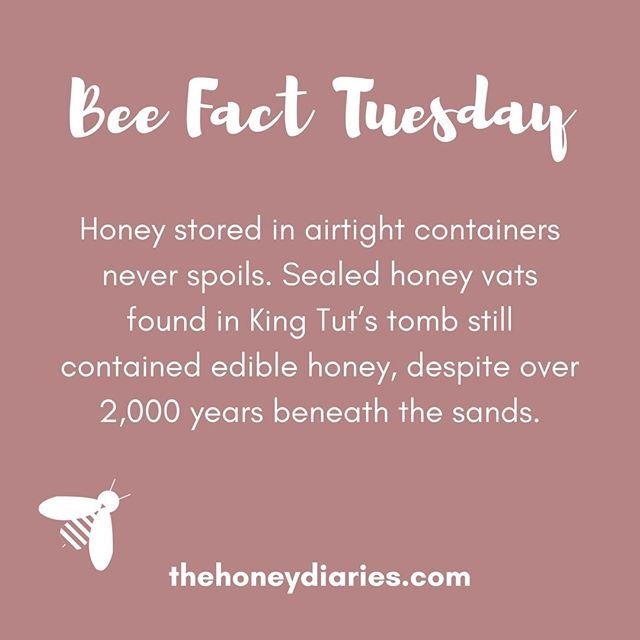 The food that (literally) lasts forever! 🐝🍯⏳