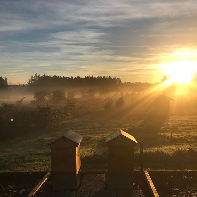 Foggy mornings in the apiary 💕