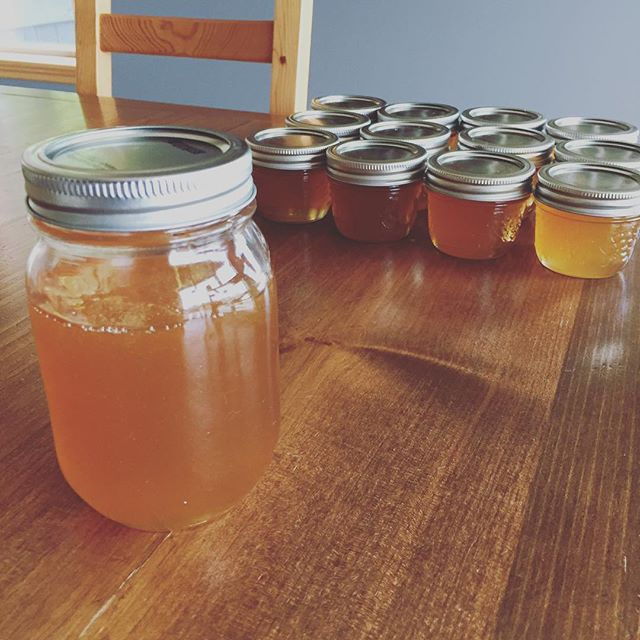 We managed to harvest some liquid gold as a silver lining after the wasps completely took over our weaker hive that we were preparing for winter. 🍯 Good news is that Beeatrice's hive is thriving and ready for the cold ❤️