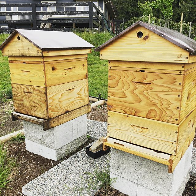 After a nice long winter break we are back in action!! We very recently decided to split our over wintered hive and it was a success! #happybees 😍🐝🎉