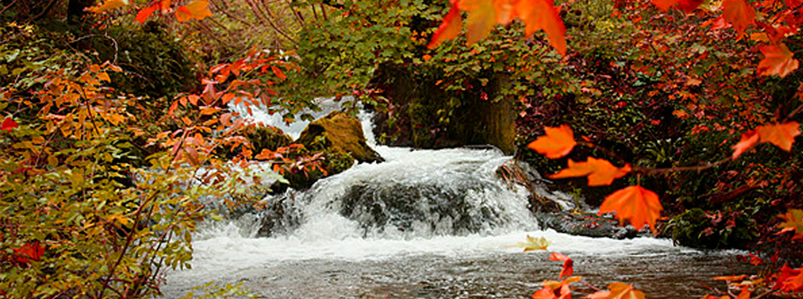 autumn_W.jpg