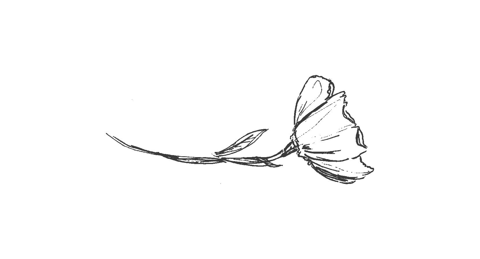 poppy-01.png