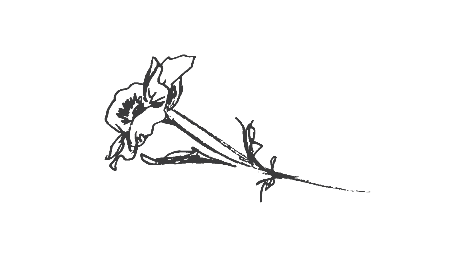 Flower gyy-01.png