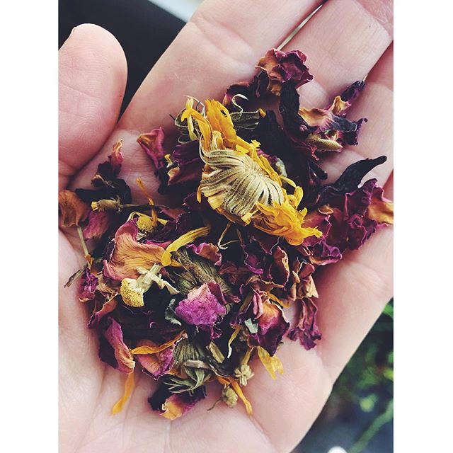 I'll be taking a break from all social media for 6 weeks to recharge and focus on things that need to get done. Leaving you with a strong recommendation to make this cold steeped tea to get you through the rest of this hot hot summer:  Rose hip- antioxidant, flavonoid  Hibiscus- immunity, cooling Calendula- anti inflammatory Chamomile- calming, digestion Damiana- nervine Lemon balm- nervine