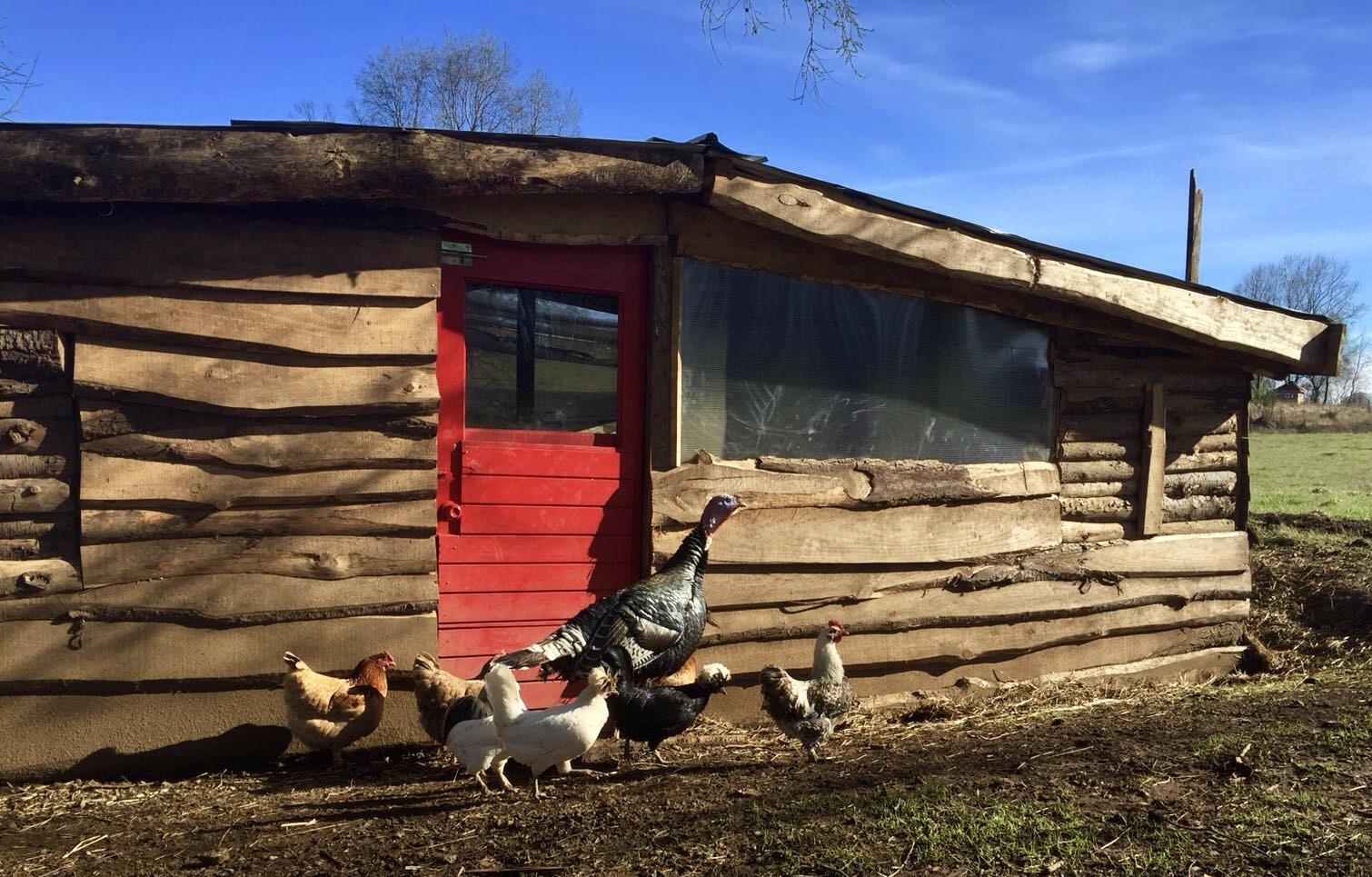 Organic Free Range Chicken coop on Samadhi Eco Resort Chile