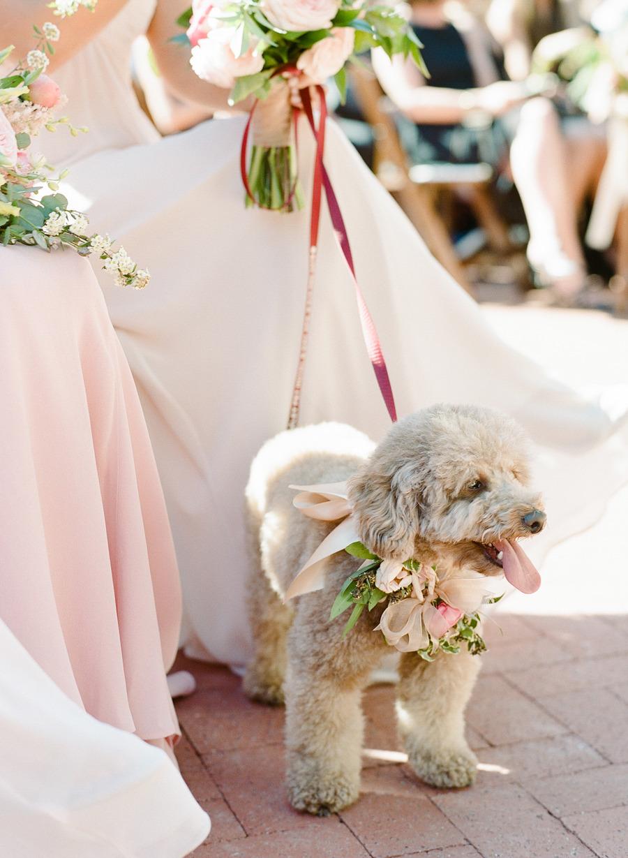 Dog-Flower-Gril