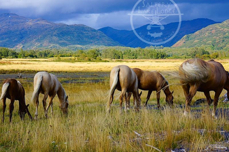 HorseButts.jpg
