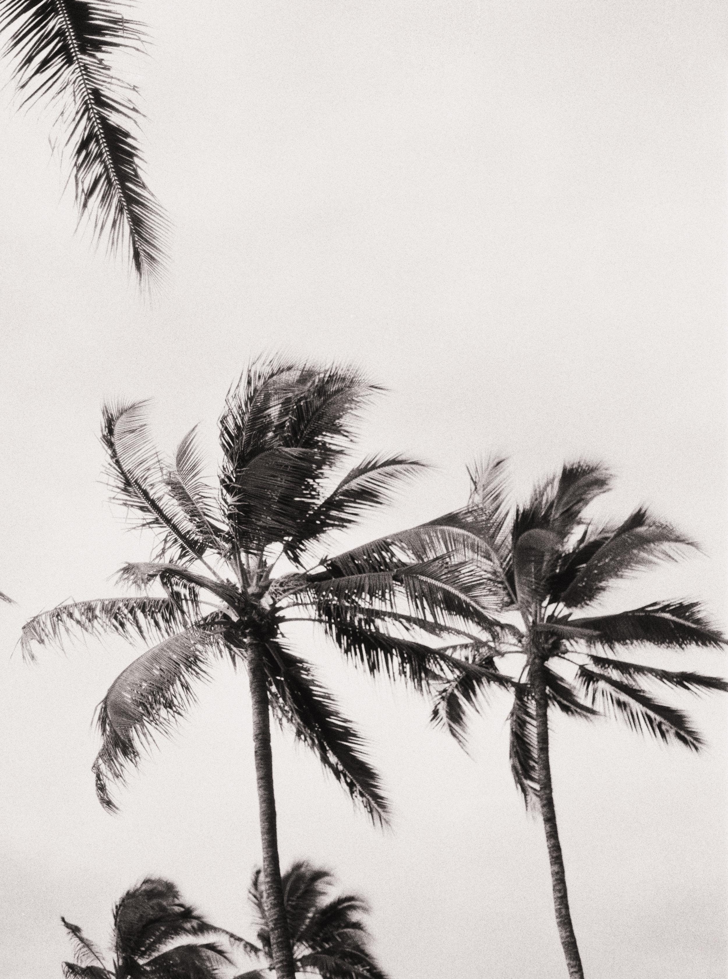 Erich McVey Photography