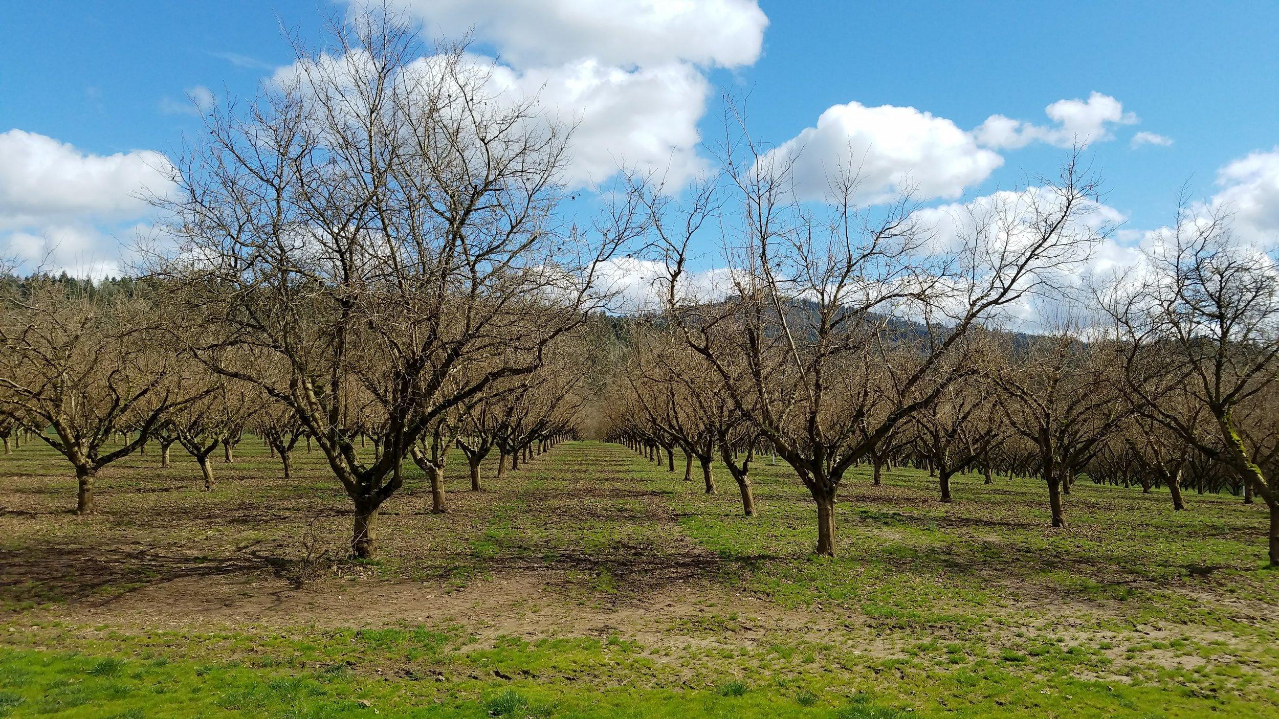 mcknitt orchard.jpg