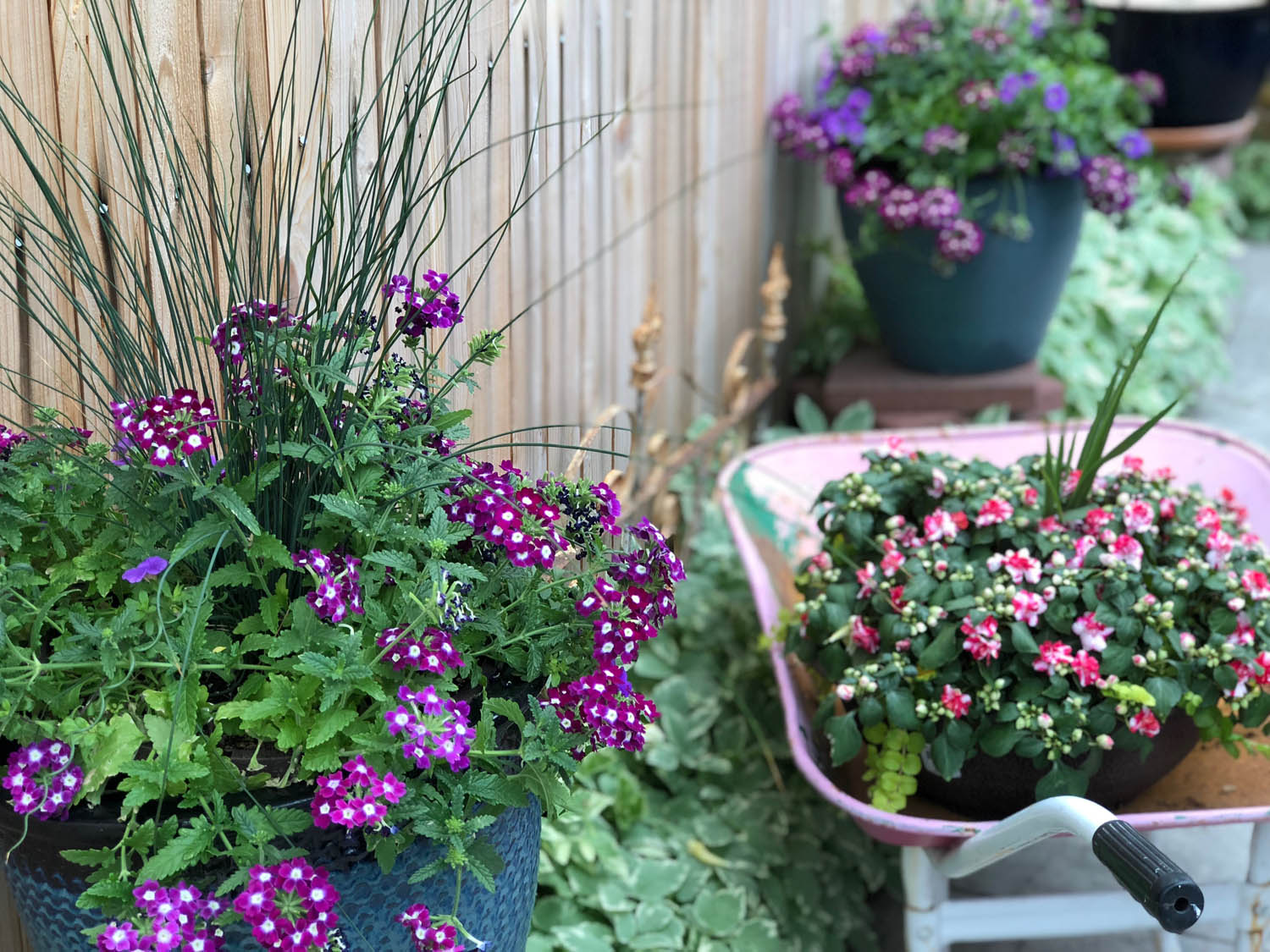 Pretty flowers on Ashley's cottage patio