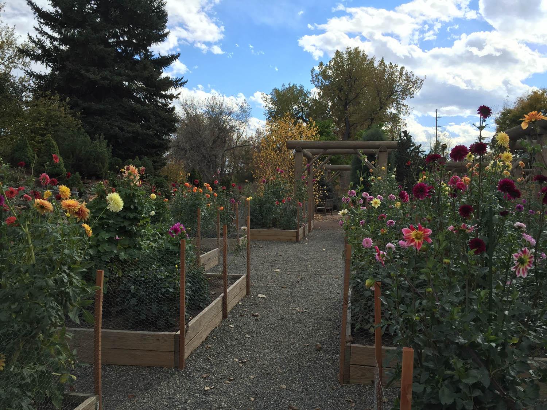 Rose garden at Hudson Gardens along Platte River bike/walking path in Littleton, CO