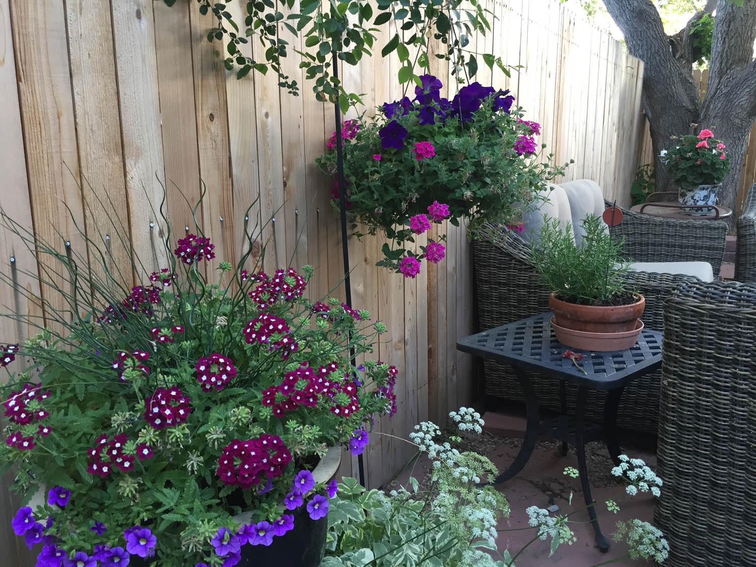 Patio containers at Curtice Cottage